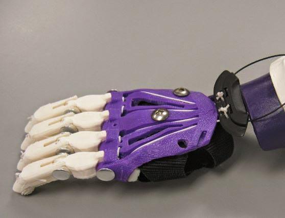 Mailis hand (no thumb) (1)